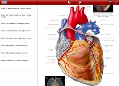 """Vista di ricerca de """"Atlante di Anatomia Umana"""""""