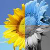 Photo Fun with Sepia Effect per iPad