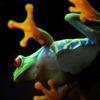 Costa Rica Trip Ideas per iPad