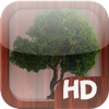 Meditation Land HD per iPad