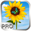 Photo Manager Pro per iPad