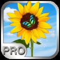 Photo Manager Pro per iPad