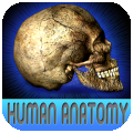 Atlas Of Real Human Anatomy HD per iPad