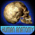 Atlas Of Real Human Anatomy HD per iPad